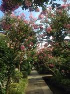 夏らしい近所の風景