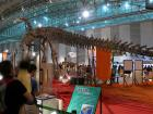 今年も幕張メッセ恐竜展