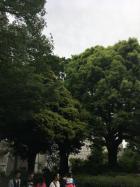 緑濃い上野公園